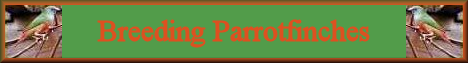 parrotfinches index banner